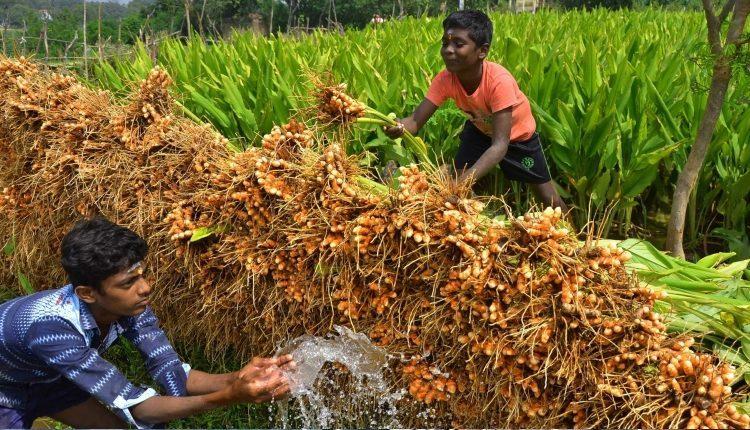తెలంగాణలో పసుపు బోర్డు పెట్టే ఉద్దేశం లేదు: కేంద్ర ప్రభుత్వం