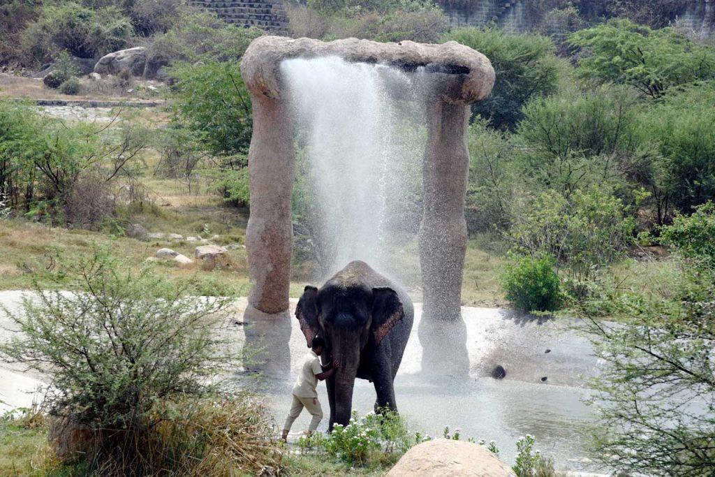 Elephant at hyderabad nehru zoo park in summer season