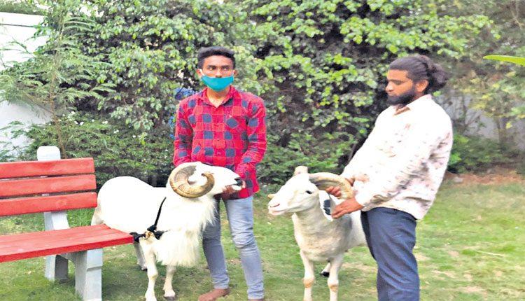 ఫిల్మ్నగర్లో గొర్రె పొట్టేళ్ల పందెం..11మంది అరెస్ట్