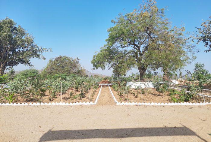 నందనవనంలా.. నారాయణపేట్