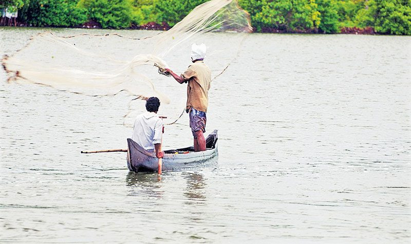 'ధర్మాయ' చేపలకు భలే క్రేజీ