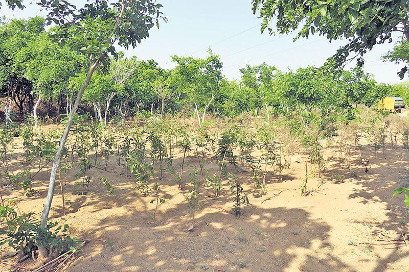 నయా నర్సాపూర్