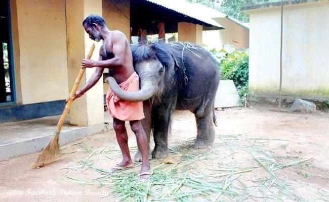 వైరల్ ఫోటో : షరతులు లేని ప్రేమకు చిహ్నం!