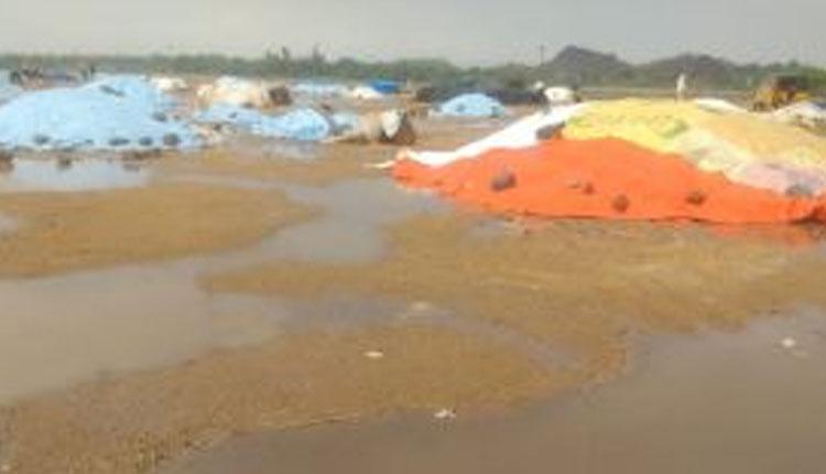 భారీ వర్షాలకు తెలంగాణలోని పలు జిల్లాల్లో దెబ్బతిన్న పంటలు