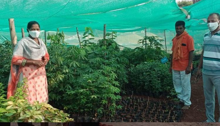 మొక్కల సంరక్షణపై దృష్టి సారించాలి  : ఎంపీడీవో