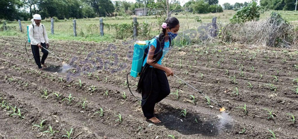 నాన్నకు తోడుగా.. వ్యవసాయ పనుల్లో కూతురు