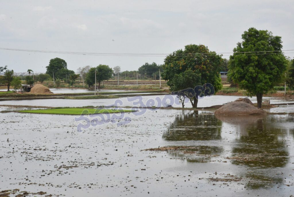తెలంగాణలో చురుగ్గా సాగు పనులు