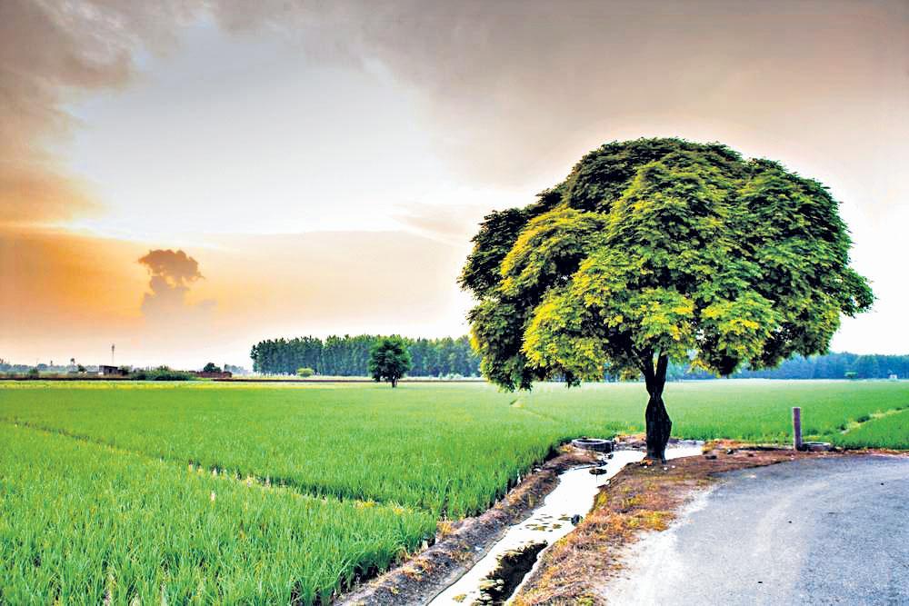 వ్యవసాయ భూముల డిజిటల్ సర్వే