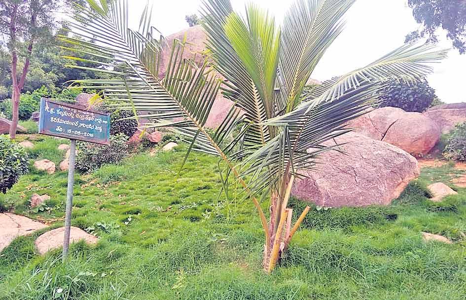 సీఎంమెచ్చిన మల్కాపూర్