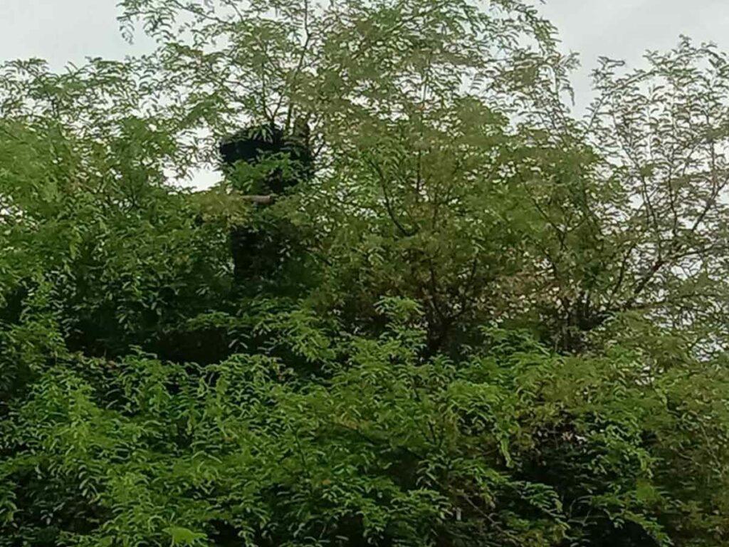హిమ్మత్నగర్లో ఎలుగుబంటి హల్చల్
