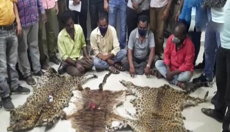 పులి చర్మాలను స్మగ్లింగ్ చేస్తున్న 8 మంది ముఠా అరెస్ట్..!