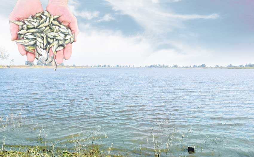 మత్స్య సిరికి సన్నద్ధం!